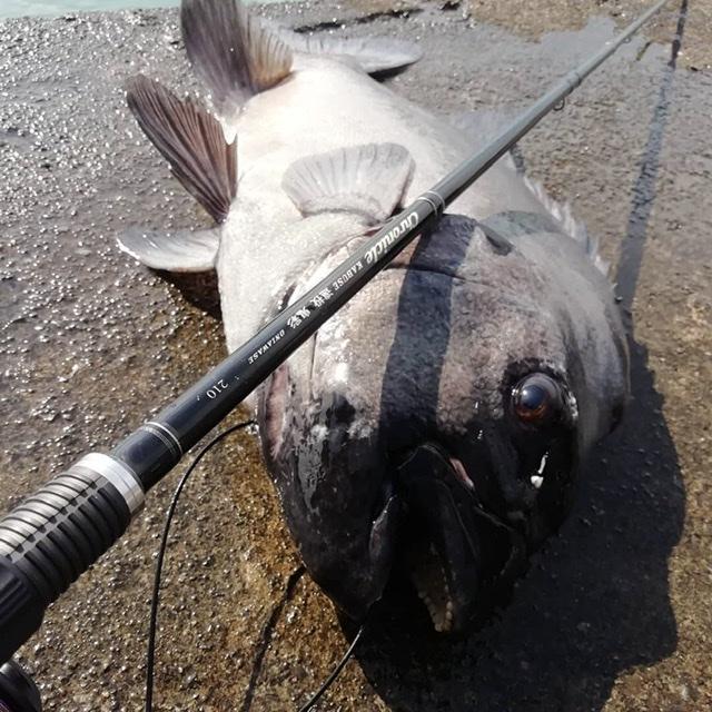 kt2020fishing様のレポート